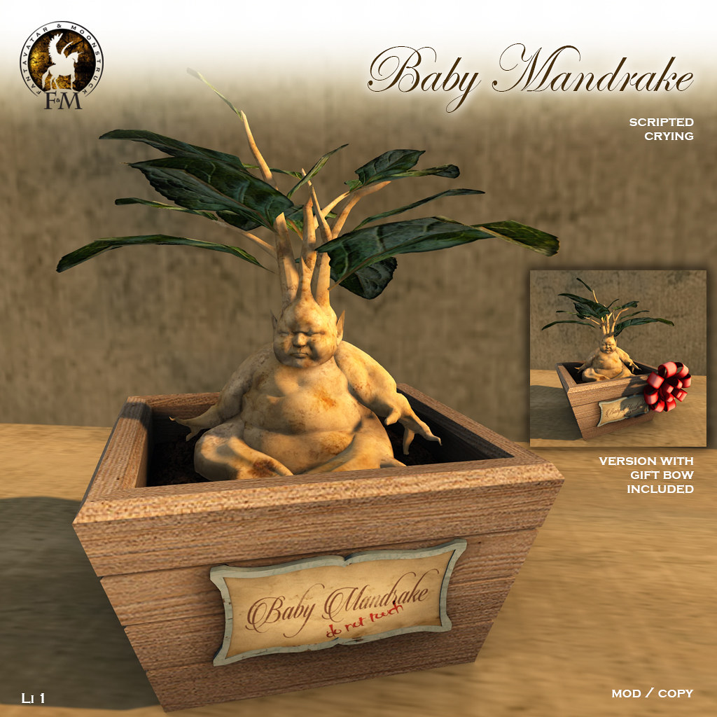 F&M * Baby Mandrake * DO NOT TOUCH!