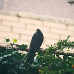 Bird Bokeh - 23. Dezember 2018 - Tarbek - Schleswig-Holstein - Germany