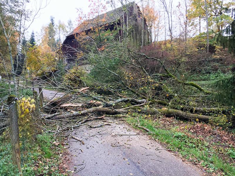 SturmschadenGeisberg-1