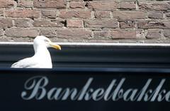 Meeuwen in Vlissingen (1)