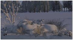 .The Arctic Winter Nature scene