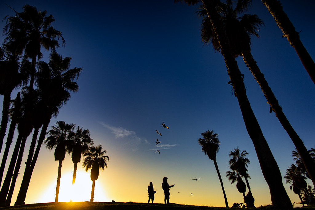 Silhouettes On Venice Beach