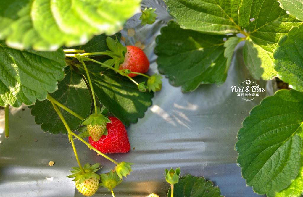 小農夫草莓園02