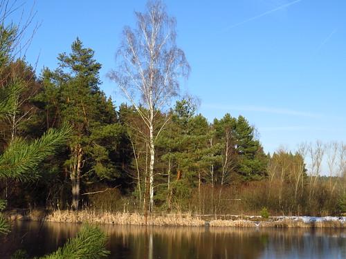 Wald am Teich