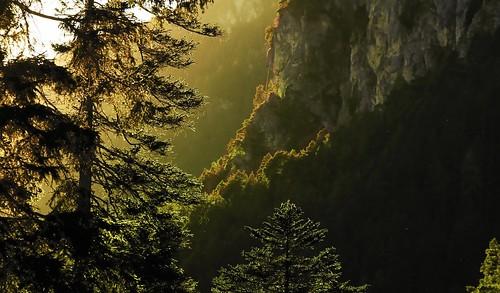 Rosengartengebiet, Catinaccio - Wanderung durch das Tschamintal; Südtirol, Italien (606)