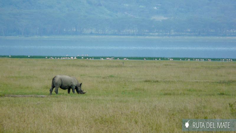 Guia para viajar a Kenia y Tanzania P1130448