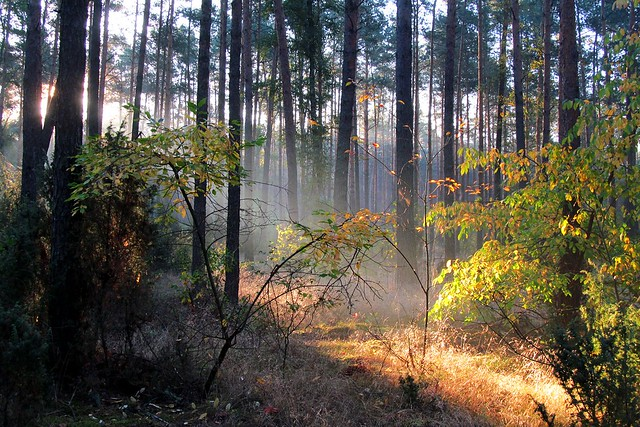 morning in the forest :), Canon POWERSHOT SX150 IS