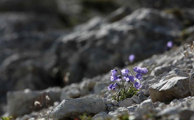 Torneranno a fiorire ..... .., Canon EOS 60D, Canon EF 70-200mm f/4L
