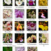 Orchids Identification Photo Guide
