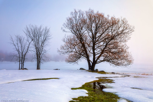 maine fog winter winterfog mist snow landscape nature tree silhouette wassookeag lake ice pond lakewassookeag dextermaine penobscotcounty newengland sunrise morning reflection snowscape december season trees morningfog morningmist