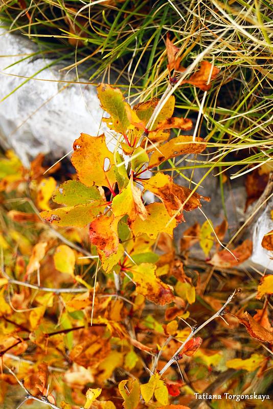 Растение с желтыми листьями