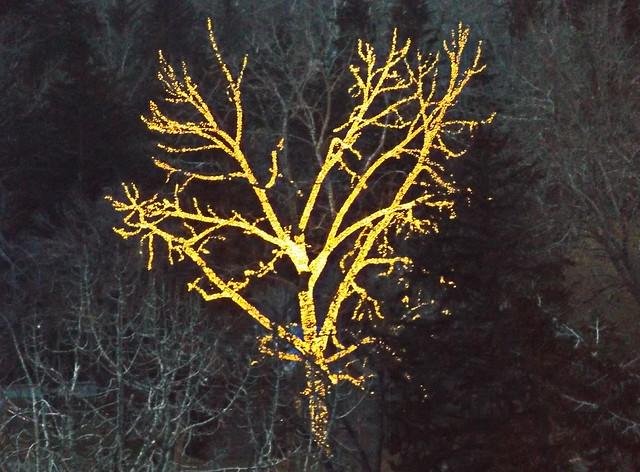 Tree In Bowness Park, Fujifilm FinePix S8600 S8650 S8630