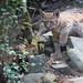 Li'l explorer Lynx