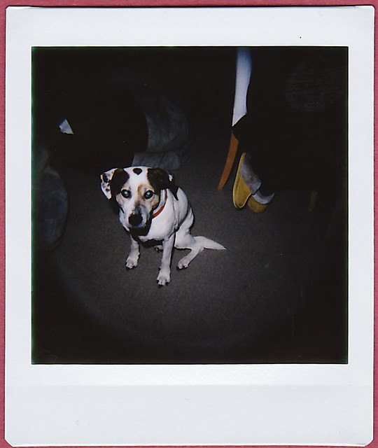 Dog flash