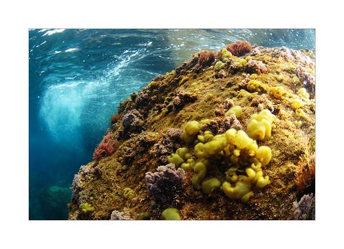 Underwater azores
