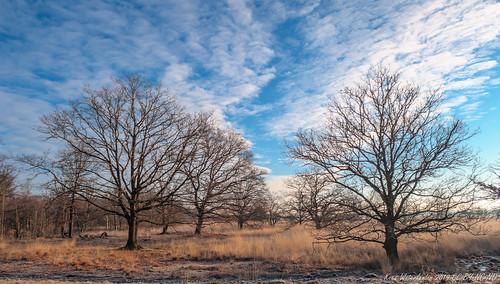 Trees Bargerveen