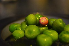 Micro pig hiding in the peas.