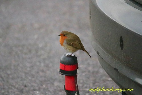 Hitching a Ride........