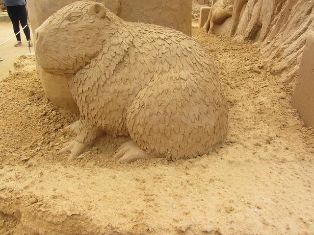 Capybara, A Day at, Canon POWERSHOT SX220 HS