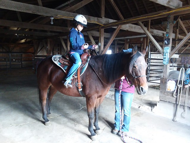 Horse Lessons (7)