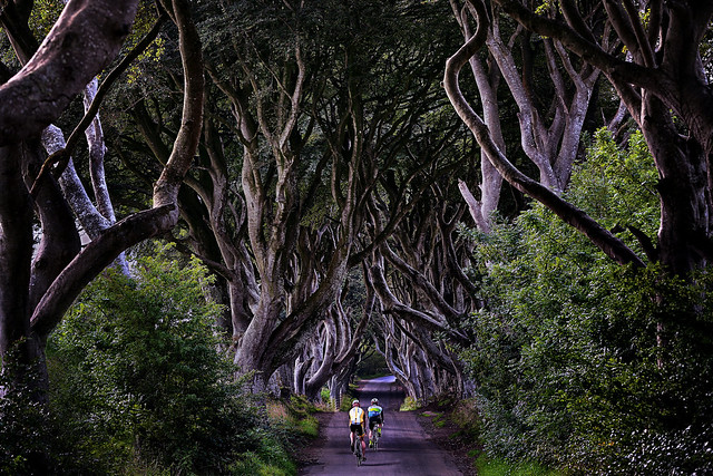 Cycling in the Dark Hedges