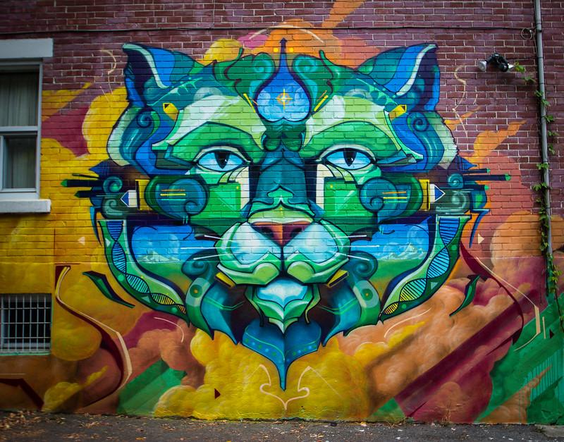 chat de ruelle-2
