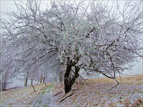 Der Winter hält Einzug im Osterzgebirge