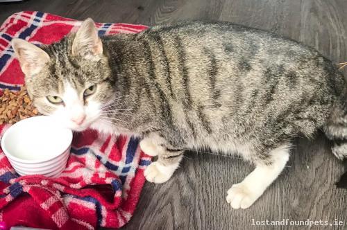 foundcatathouseleitrim found cat house leitrim december 2018
