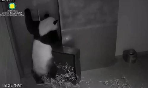 Panda Bei and his box