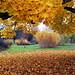 November by larseriksfoto