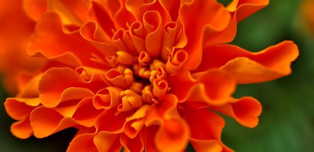 Macro Flower, Nikon D40, AF-S DX Micro Nikkor 40mm f/2.8G
