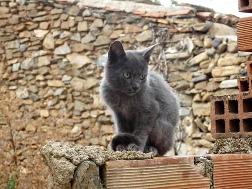 Gato negro.