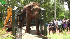 A humble elephant gets a free pass to a national park. (Rescue and Relocate)
