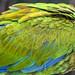 macaw feathers por ikarusmedia