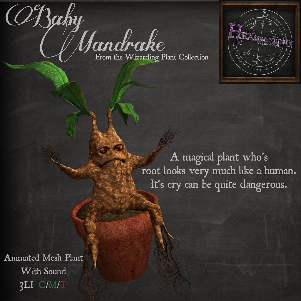 Cranky Baby Mandrake @ FLF
