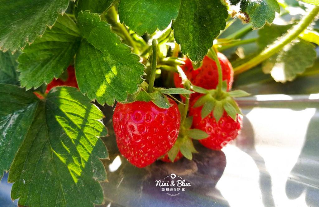 草莓世界.台中採草莓07