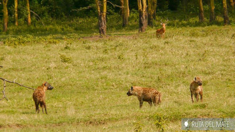 Animales hacer un safari P1130666