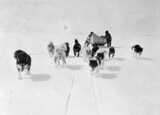 A dog team on Gordon Bay, Hudson Strait, Nunavut / Attelage de chiens sur la baie Gordon, détroit d'Hudson (Nunavut)