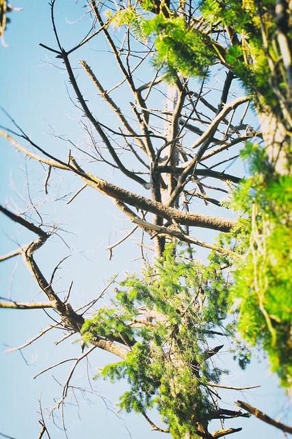stick tree, Canon EOS REBEL SL1, Canon EF 70-200mm f/4L