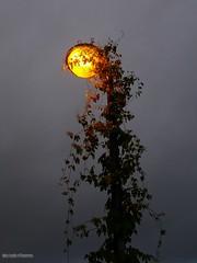 La lumière et la vie - Photo of Béthon