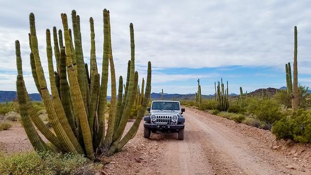 Super Size my Cactus Please