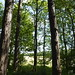 Notton Wood Nature Reserve (142)