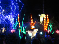 Wild Lights @ Dublin Zoo 2018