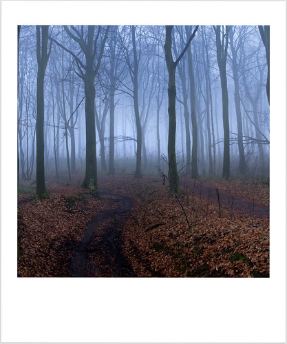 Misty Forest (Polaroid Crop)