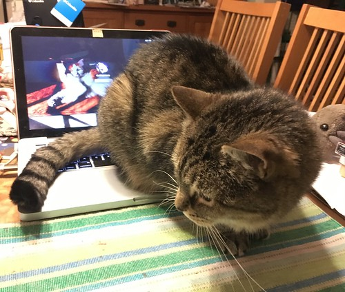 Mavis just realized that notebook computers are warm