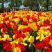 Geschmack auf den kommenden Frühling gefällig …? Taste for the coming spring pleases ... ? Avant-goût du printemps à venir plaît ... ?