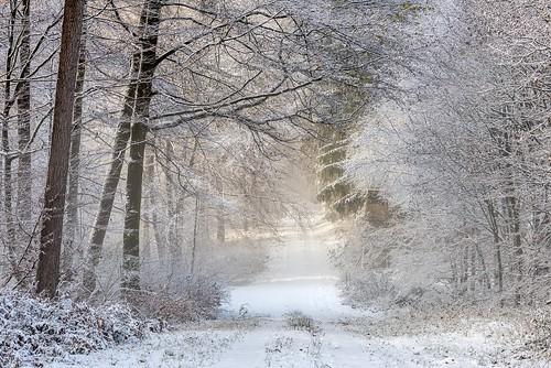 *Eifel-Winter II*