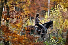 The rider in Retz forest - Photo of Saint-Pierre-Aigle