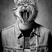 Peanut Rocker Cat