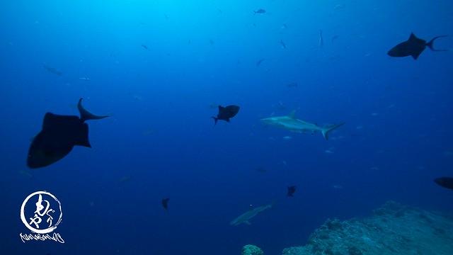 朝はサメが活発に動き回っってました